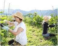 農業体験(有機野菜作り)